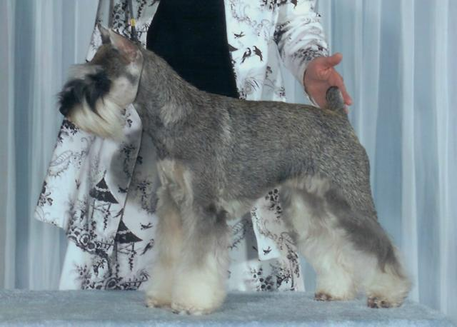 Silvercastle Miniature Schnauzers Our_Girls